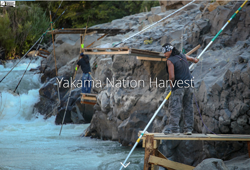 Yakama Nation Harvest