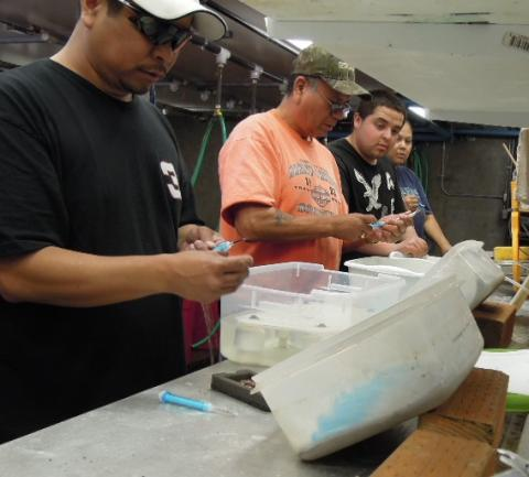 Yakima basin sockeye reintroduction yakama nation fisheries for Prosser dam fish count