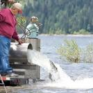 Mel Sampson releasing Sockeye into Lake Cle Elum (2009)