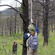 Technician inspeciting Hairy Woodpecker cavity with Tree Top Peeper IV nest camera